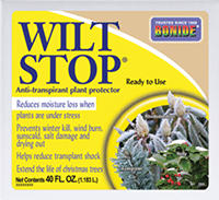 Winter Protection For Evergreens