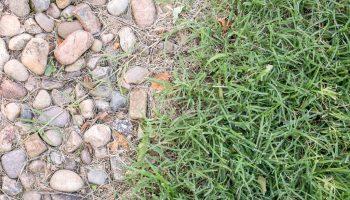 Bermuda Grass Control
