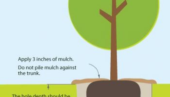 Tree & Shrub Planting Guide
